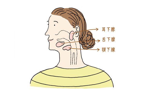 歯周病や生活習慣病まで予防。実はすごい、唾液のチカラ。
