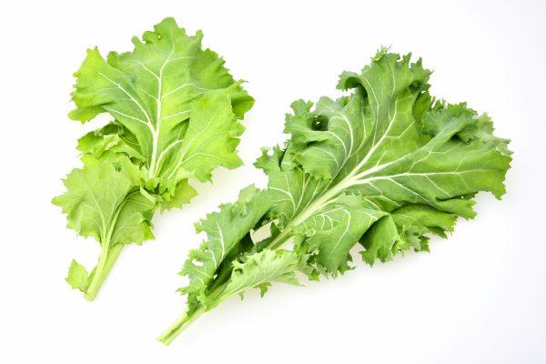 【野菜力診断】Q.ケール、明日葉、大麦若葉などを原料とする苦い飲 …